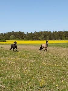 Sommar hästar 2020
